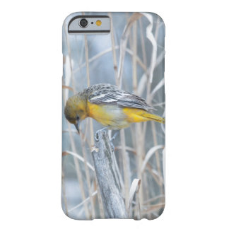 Animal Bird Baltimore Oriole Barely There iPhone 6 Case