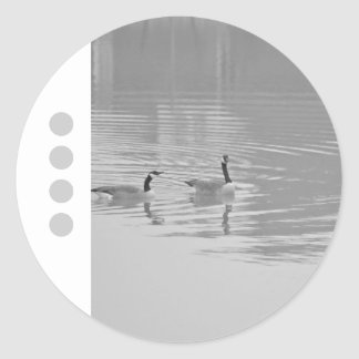 Animal Bird Canada Geese 5 Classic Round Sticker