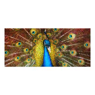 Animal - Bird - Peacock proud Rack Cards