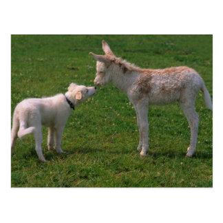 Animal lover shank, young donkey with dog, postcard