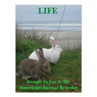 Animals are Life Poster