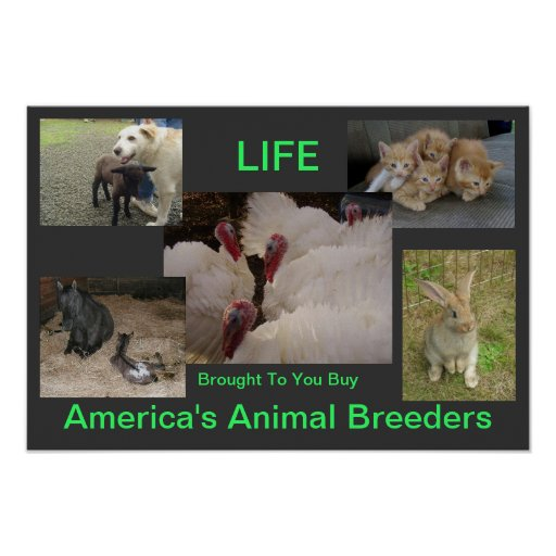 Animals are Life Poster 4