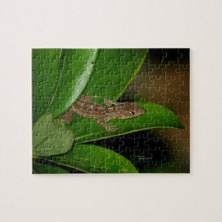 Anole Lizard Puzzle
