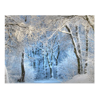 another winter wonderland postcard