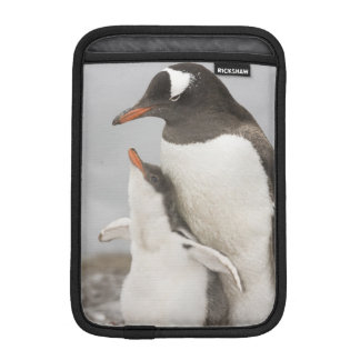 Antarctica, Aitcho Island. Gentoo penguin chick iPad Mini Sleeve