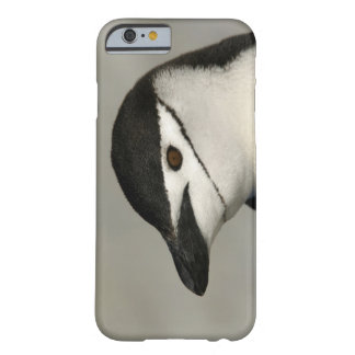 Antarctica, Half Moon Island. Close-up of adult Barely There iPhone 6 Case