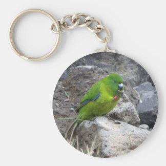 Antipodes Island Parakeet Basic Round Button Key Ring