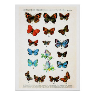 Antique plate, butterflies of Europe: plate 6 Poster
