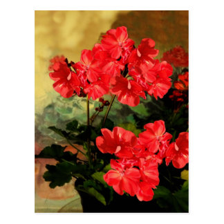 Antique Style Red Geranium Flowers  Gifts Postcard