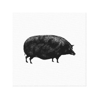 Antique Vintage Pig Canvas Print
