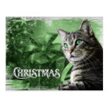 APAL - Christmas Silver Tabby Cat Post Cards