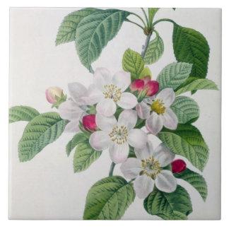 Apple Blossom, from 'Les Choix des Plus Belles Tile
