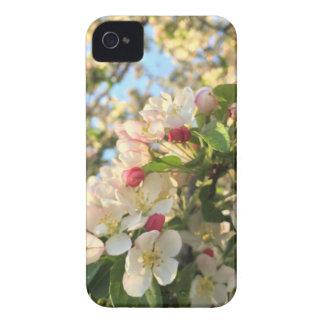 Apple Blossom Sunshine iPhone 4 Case-Mate Case