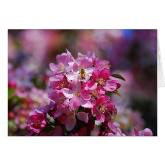 Apple Blossoms and Honeybee Card