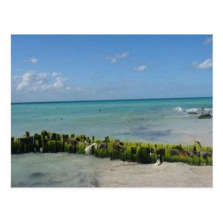 Aqua Serenity Postcard