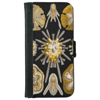 Aquatic Life ~ Haeckel ~ Sea Urchins iPhone 6 Wallet Case