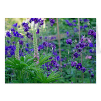 Aquilegia and Lupine flower card