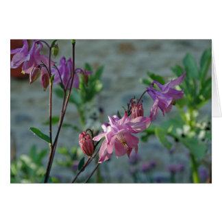 Aquilegia flower card