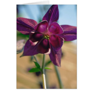 Aquilegia vulgaris flower card