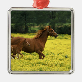 Arabian foal and mare running through christmas ornament