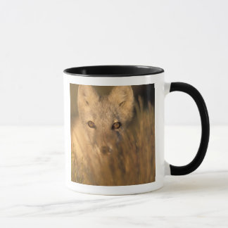arctic fox, Alopex lagopus, on the 1002 coastal 2 Mug