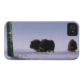 Arctic Musk Oxen Sacred Bovines Wildlife Art iPhone 4 Case-Mate Case