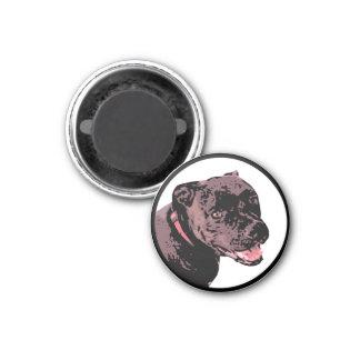 Argus magnet