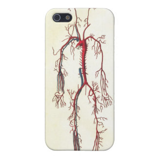 Arteries Anatomical Art iPhone 5 Cover