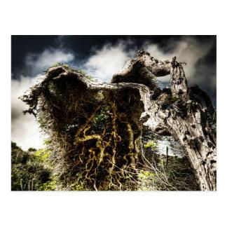 Aruba, divi tree postcard