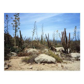 Aruba Landscape With Cactus Postcard