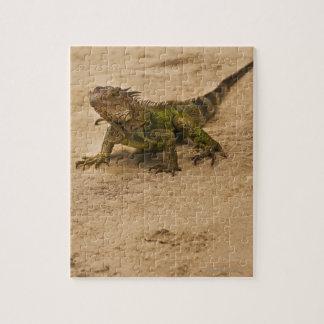 Aruba, lizard on sand jigsaw puzzle
