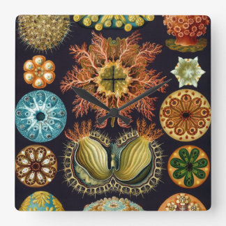 Ascidiae by Ernst Haeckel, Vintage Marine Animals Square Wall Clock