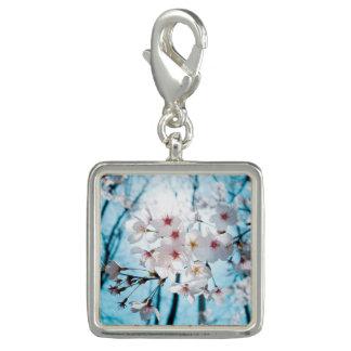 Asia Cherry Blossoms