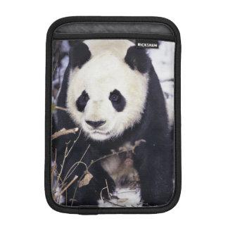 Asia, China, Sichuan Province. Giant Panda in 2 iPad Mini Sleeve