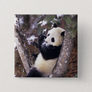 Asia, China, Sichuan Province. Giant Panda up 15 Cm Square Badge
