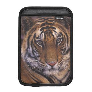 Asia, India, Bandhavgarth National Park, iPad Mini Sleeve