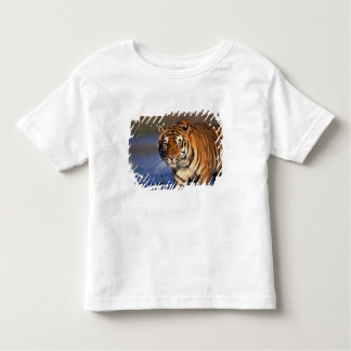 ASIA, India, Bengal Tiger Panthera tigris) Toddler T-Shirt