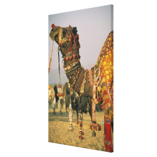 Asia, India, Pushkar. Camel Shamu , Pushkar Canvas Print