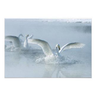 Asia Japan Hokkaido Akan NP Kussharo Lake Art Photo