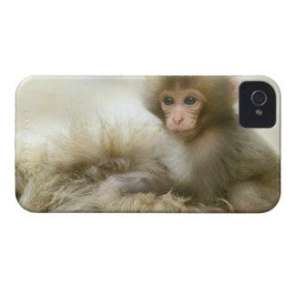 Asia, Japan, Nagano, Jigokudani, Snow Monkey 3 Blackberry Case