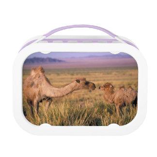 Asia, Mongolia, Gobi Desert, Great Gobi Lunch Box