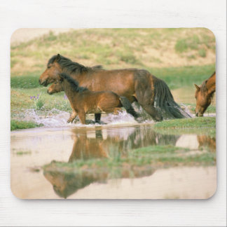 Asia, Mongolia, Gobi Desert. Wild horses. Mouse Pad