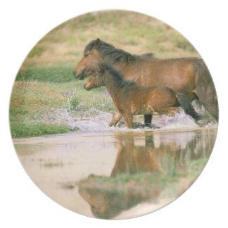 Asia, Mongolia, Gobi Desert. Wild horses. Plate