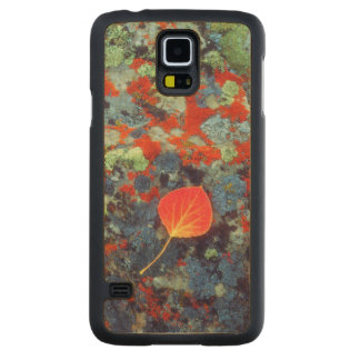 Aspen leaf on a lichen covered rock carved maple galaxy s5 case