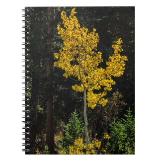 Aspen Tree - Autumn - Forest - Sunlight Notebooks