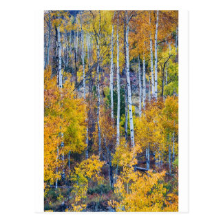 Aspen Tree Magic Cottonwood Pass Postcard