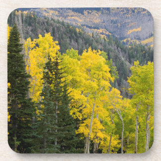 Aspen Trees (Populus Tremuloides) And Conifers 2 Coaster