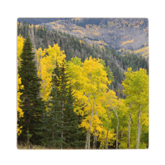 Aspen Trees (Populus Tremuloides) And Conifers 2 Wood Coaster