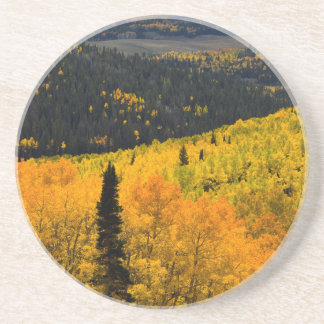 Aspen Trees (Populus Tremuloides) And Conifers Coaster