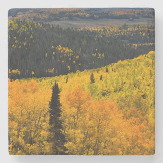 Aspen Trees (Populus Tremuloides) And Conifers Stone Coaster